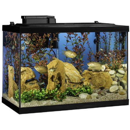 Tetra 20-Gallon LED Aquarium Starter Kit w/ Filter, Heater & Plants (20 Gallon Long Fish Tank)