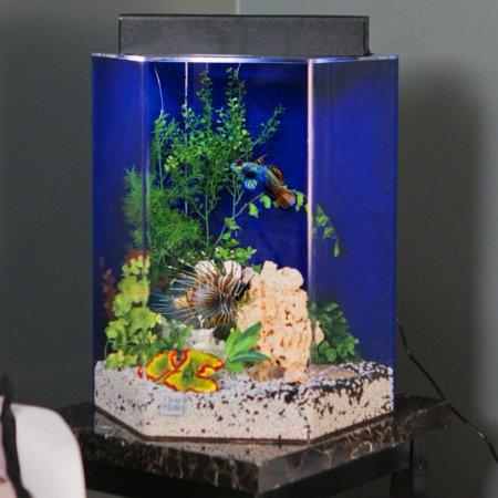 Life Hexagon Aquarium (Clear For Life 55 Hexagon Acrylic Aquarium - Clear Back )