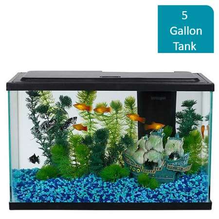 Aquarium Lighted Fish Tank - Aqua Culture 5-Gallon Aquarium Starter Kit With LED Lighting