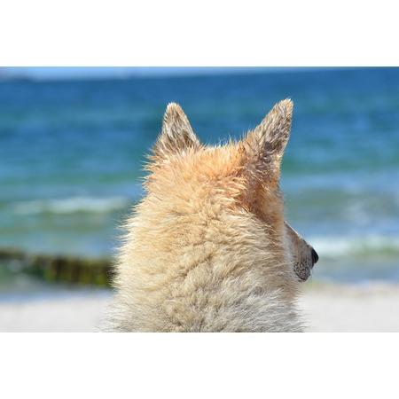 Point Hybrid (LAMINATED POSTER Animal Hybrid Sea Baltic Sea Dog Sled Dog Poster Print 24 x 36)
