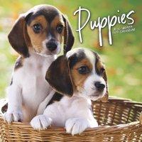 2019 Puppies Wall Calendar