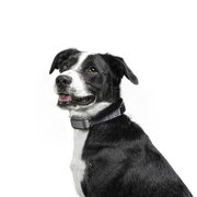 Best Bark Collars For Small Dogs - Premier Pet Rechargeable Bark Collar with 15 Levels Review
