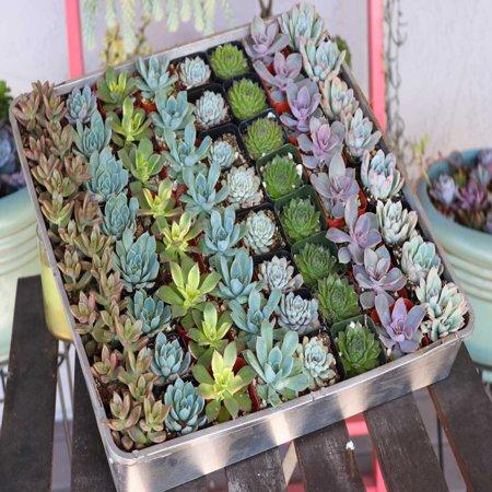Succulent Wedding Favors By The Succulent Source Succulents For