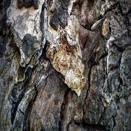 Wood Grained Laminate (LAMINATED POSTER Wood Grain Wood Texture Grain Texture Wood Pattern Poster Print 24 x)
