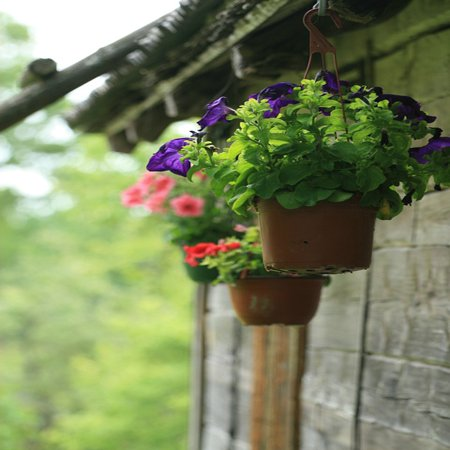 LAMINATED POSTER Flower Pot Flowers Potted Plant Outdoors Hanging Poster Print 24 x