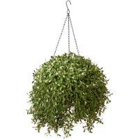 "National Tree 18"" Argentina Hanging Basket"