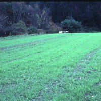 Winter Rye Seeds - 25 Lbs Bulk - Non-GMO Rye Grain Cover Crop Seeds