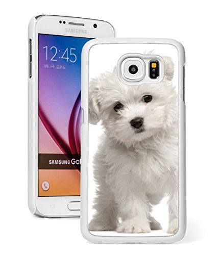 Samsung Galaxy (S6 Edge+ Plus) Hard Back Case Cover White Maltese Puppy Dog (White)