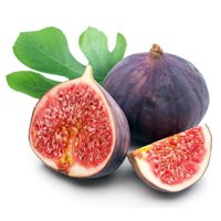 "Chicago Edible Fig Plant - Ficus - Hardy - 4"" Pot - The Hardiest Fig"