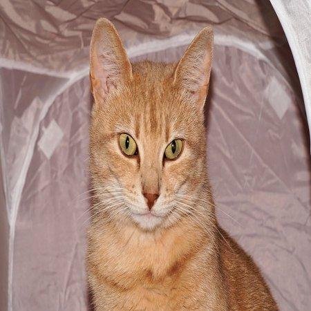 LAMINATED POSTER Female Portrait Cute Cat Domestic Cat Front Poster Print 24 x 36