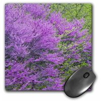 3dRose Redbud trees in full spring bloom near Defiance Ohio - US36 CHA0032 - Chuck Haney, Mouse Pad, 8 by 8 inches