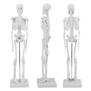 Skeleton Models