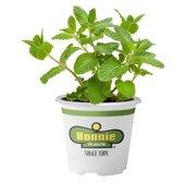 Bonnie Plants Sweet Mint Live Plant