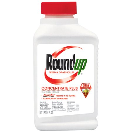 Roundup Weed & Grass Killer Concentrate Plus (Best Grass Killer For Flower Beds)