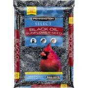 Pennington Wild Bird Seed and Feed Select Black Oil Sunflower Seed, 10 lbs
