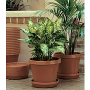 "Bloem Terra Pot Planter 10"" Terra Cotta"