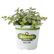 Live Indoor Plants