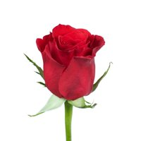 """Natural Fresh Flowers - Red Roses, 20"""", 50 Stems"""