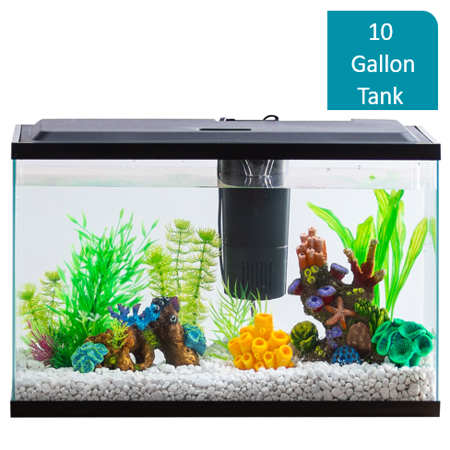 Aqua Culture 10-Gallon Aquarium Starter Kit With LED - Gallon Heavy Duty Tank