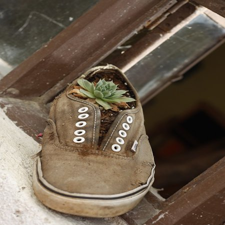 Framed Art for Your Wall Funny Shoe Decoration Flower Blossom Old Plant 10x13 (Shoe Decoration)