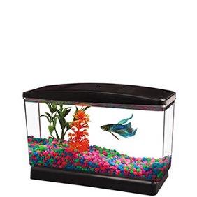 fish walmart com