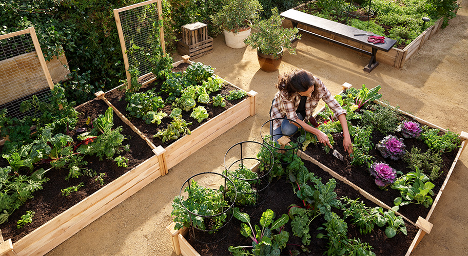 From your farm. Food just tastes better when you grow it yourself. We make it easier with raised garden beds for streamlined planting and watering, trellises to support growing vines and all the other tools you need.