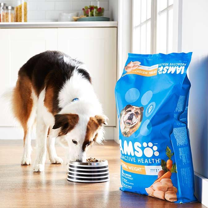 Dog weight management