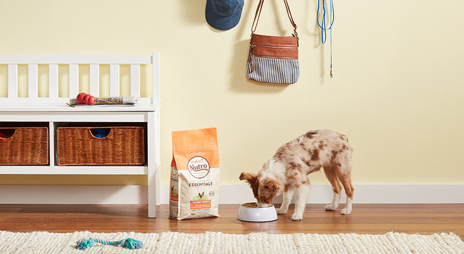 Live long and pawsper. Help your puppy grow up healthy with nutritional food and treats.