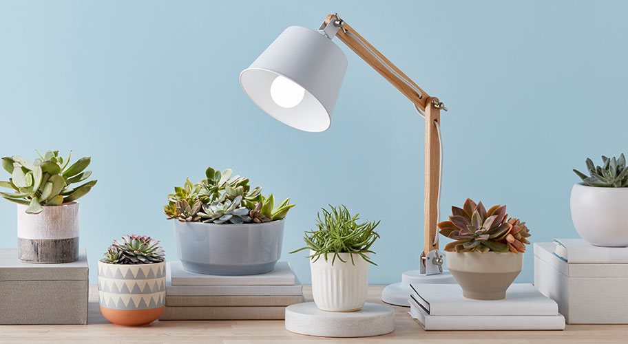 Give the Green Light. Grow your plants & succulents with lighting solutions designed for indoor life.