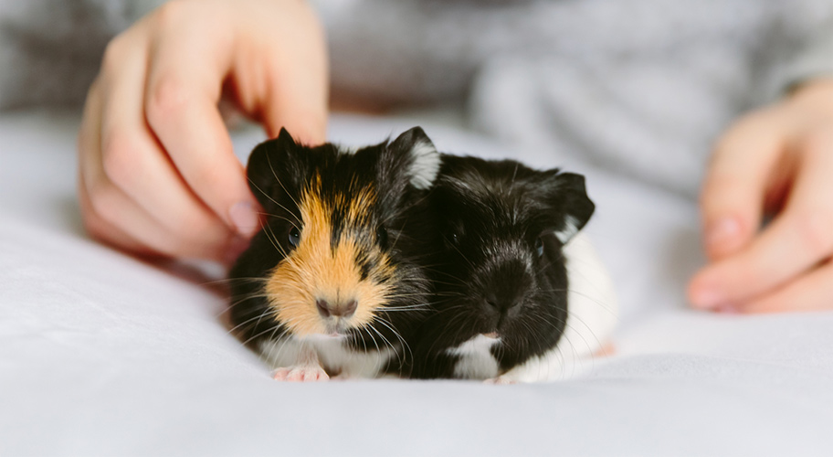 Shop & save on top rated products for your little critter