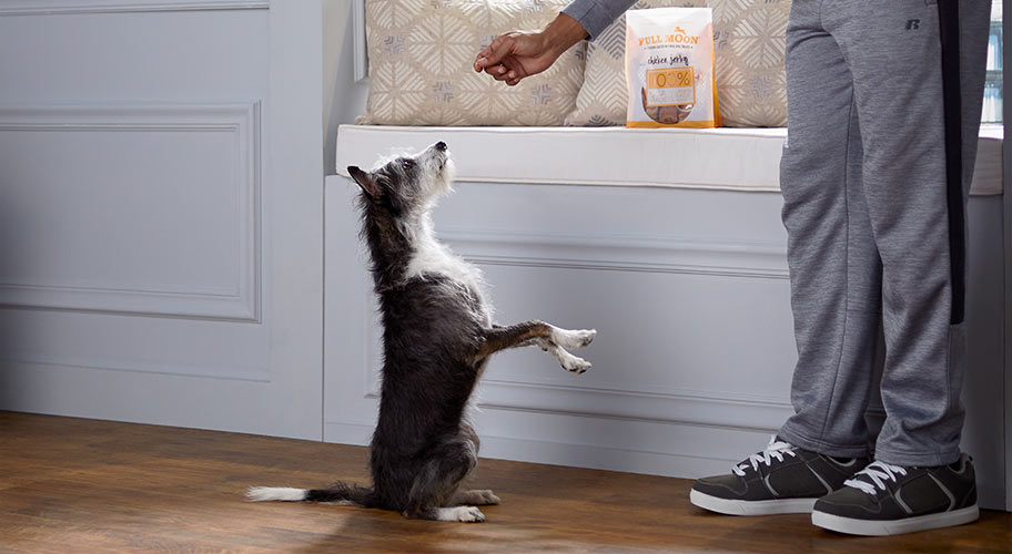 Indulge your fur baby with the tastiest treats made with the best ingredients.