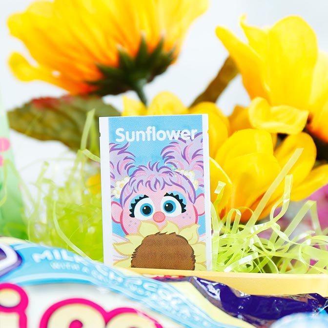 Sunflower seeds with Abby
