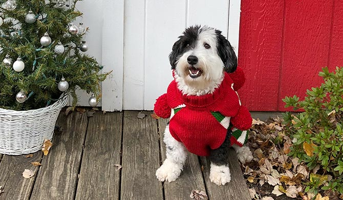 ed19debca Dog Clothing for the Holidays: 3 Puppy Apparel Outfit Themes ...